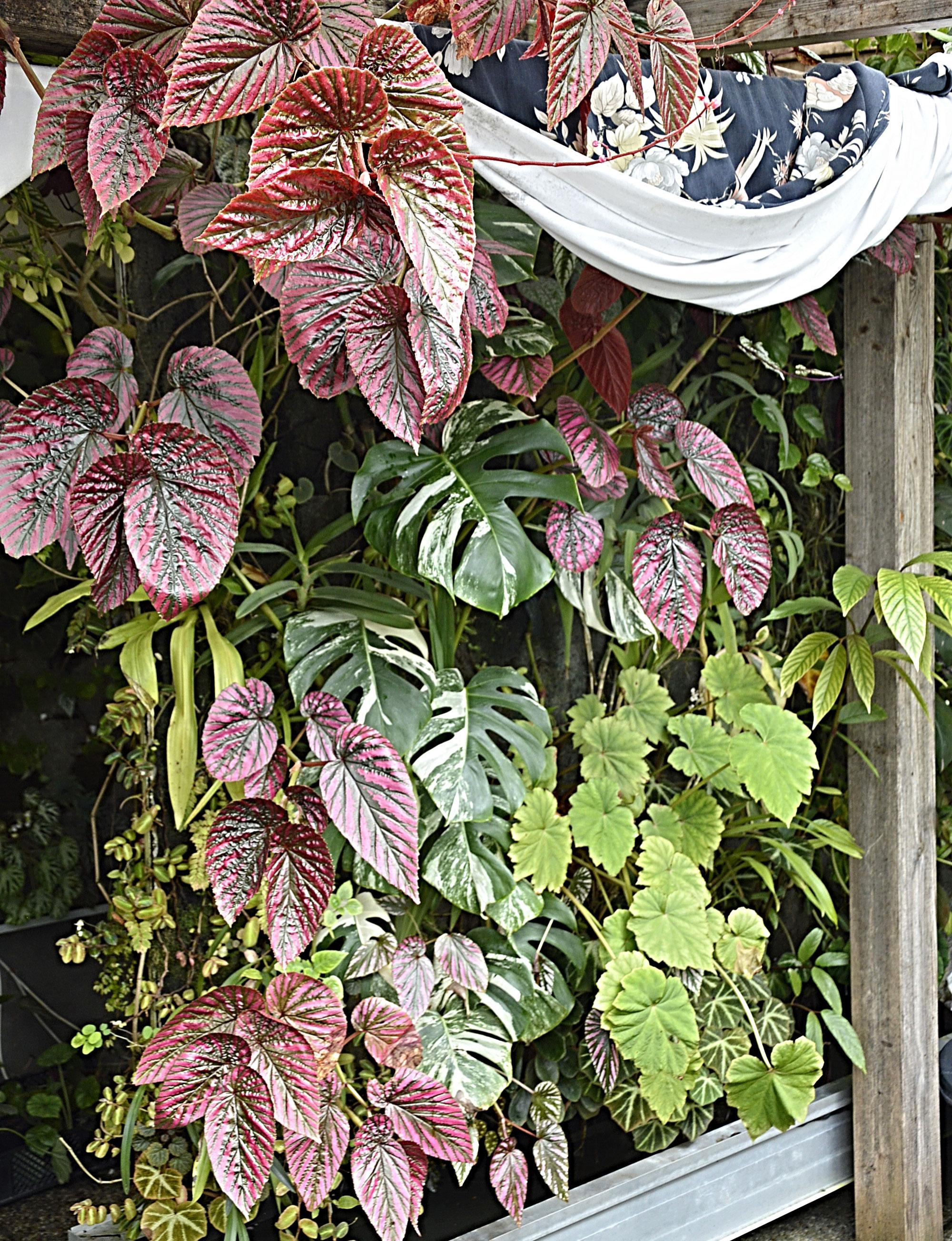 seltene pflanzen und samen kaufen rare seed and plant shop seltene pflanzen und samen. Black Bedroom Furniture Sets. Home Design Ideas