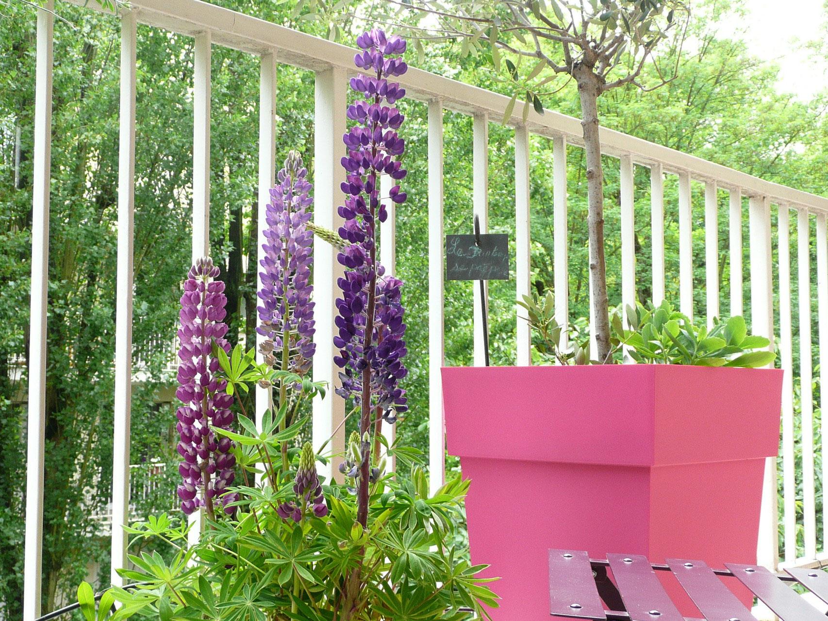 Particuliers privil ge jardin paysagistes conseil for Tarif paysagiste conseil
