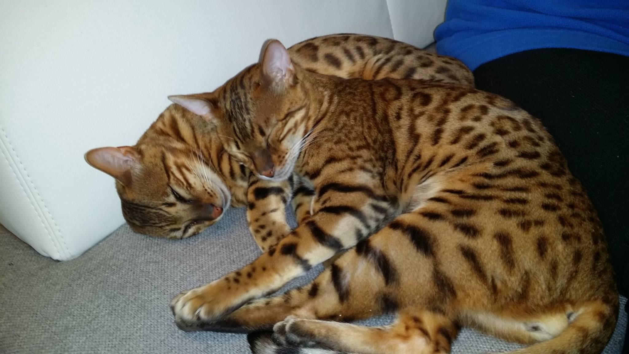 Katze Einzelgänger