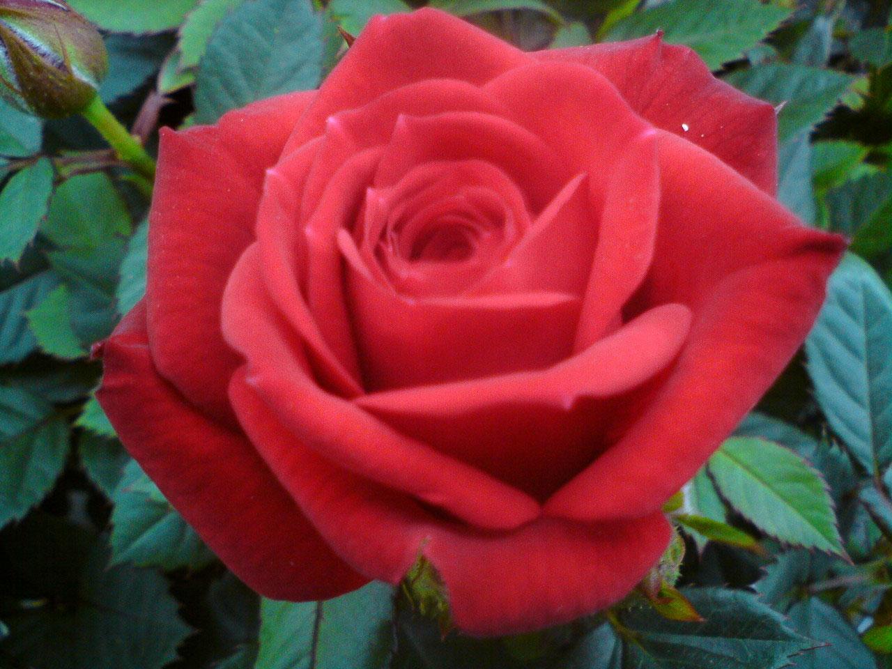 Printemps Fleurs Serres De Gouaix