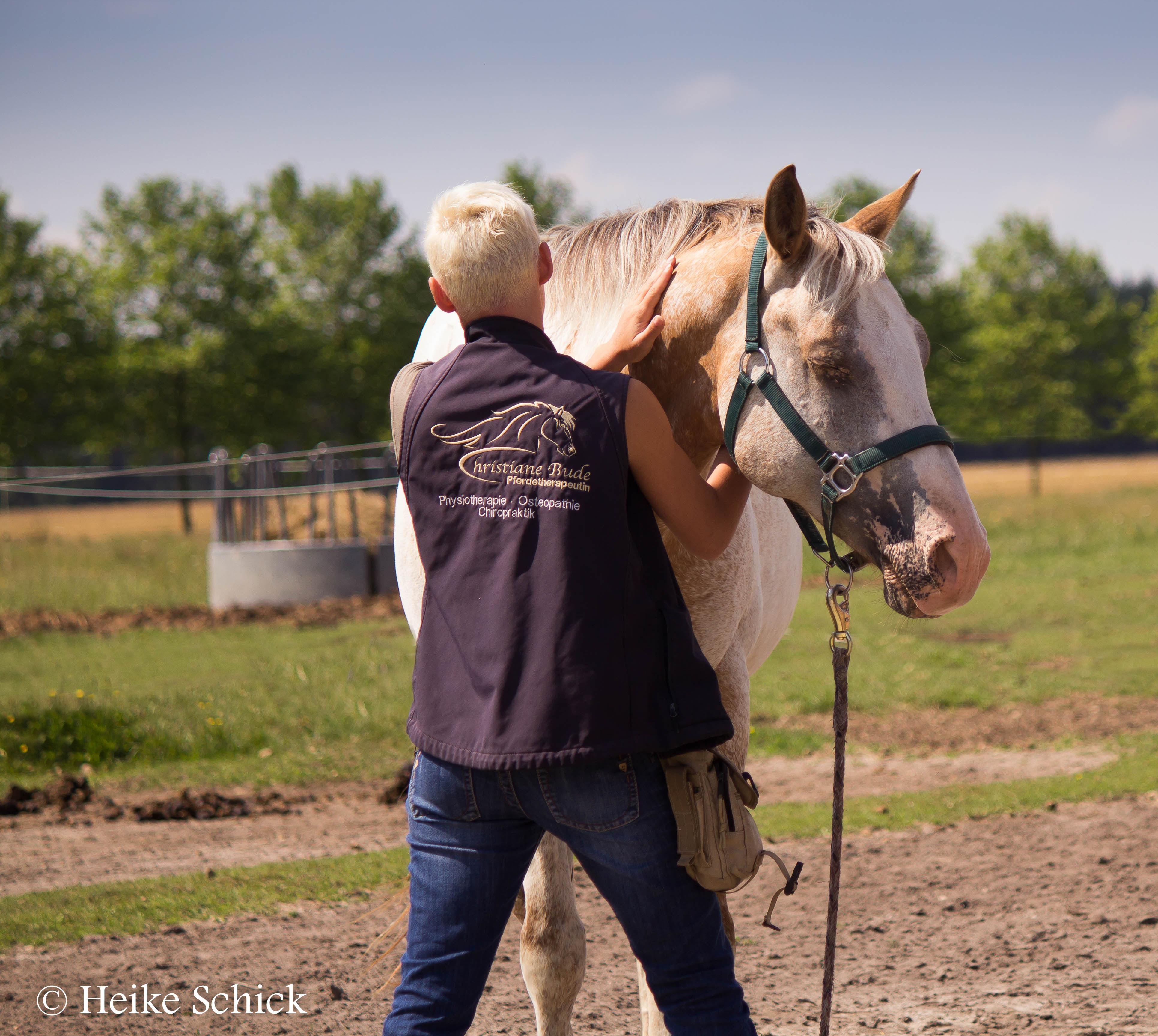 osteopath f r pferde der pferdespezialist physiotherapie osteopathie chiropraktik. Black Bedroom Furniture Sets. Home Design Ideas