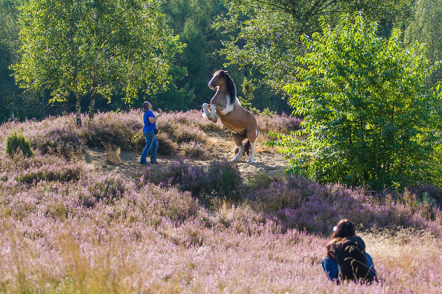 Serien Mit Pferden