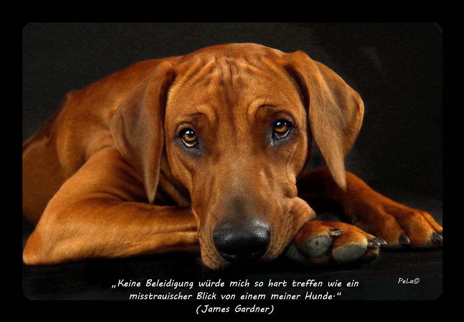Nachdenken zum hunde zitate 43+ Hundesprüche