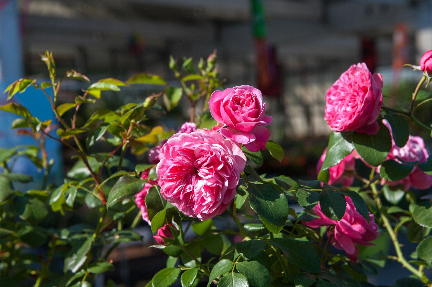 Blumen Bleker