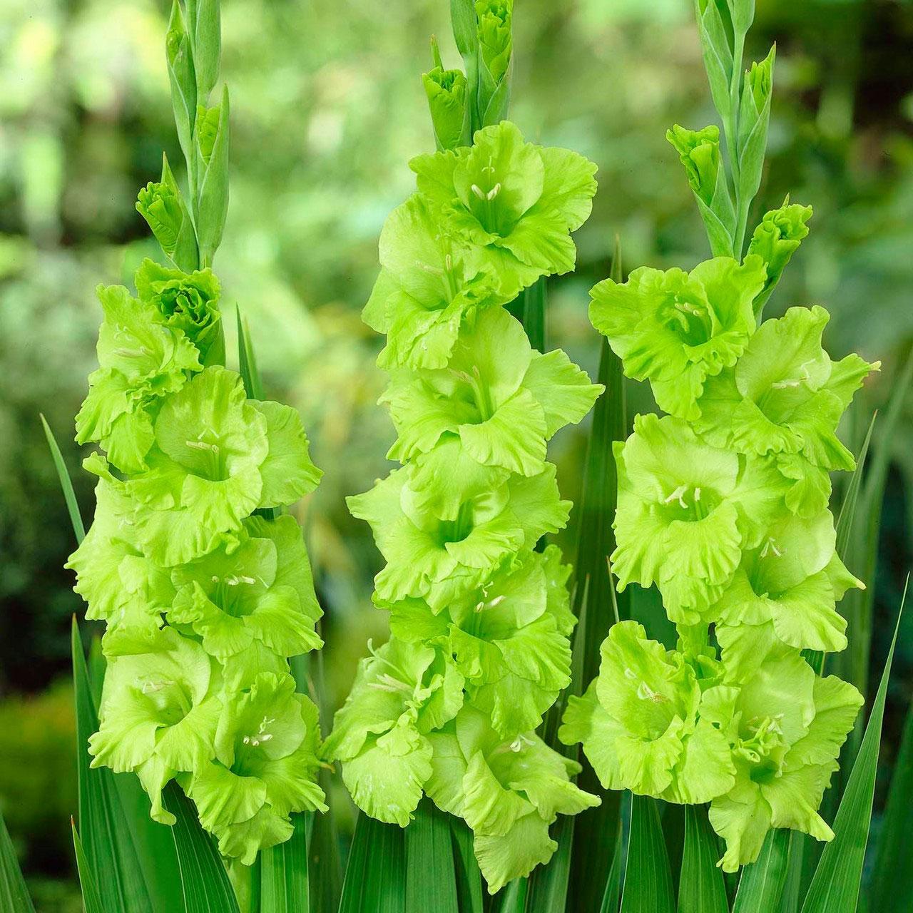 цветы зеленого цвета в саду фото капюшоне