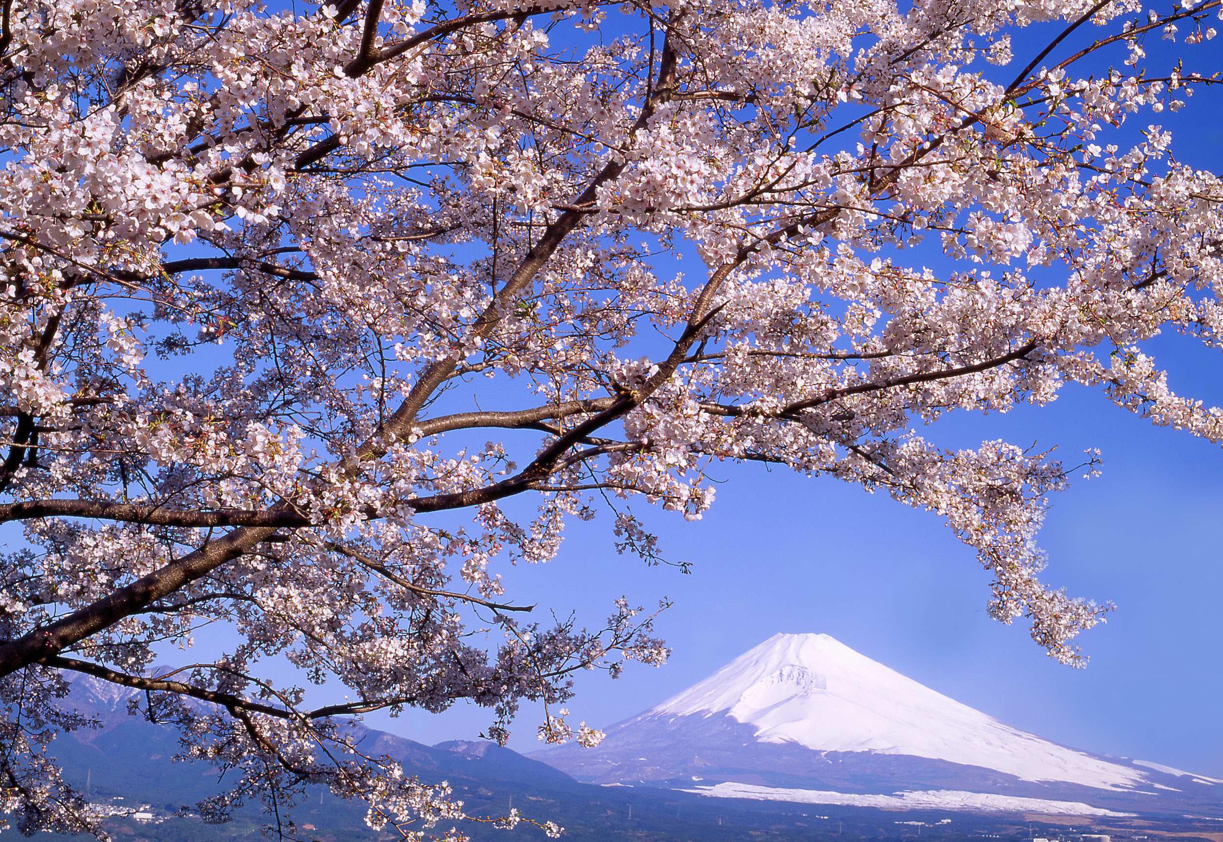 Pc壁紙 富士山 裾野市の富士山フリー素材です 裾野市観光協会