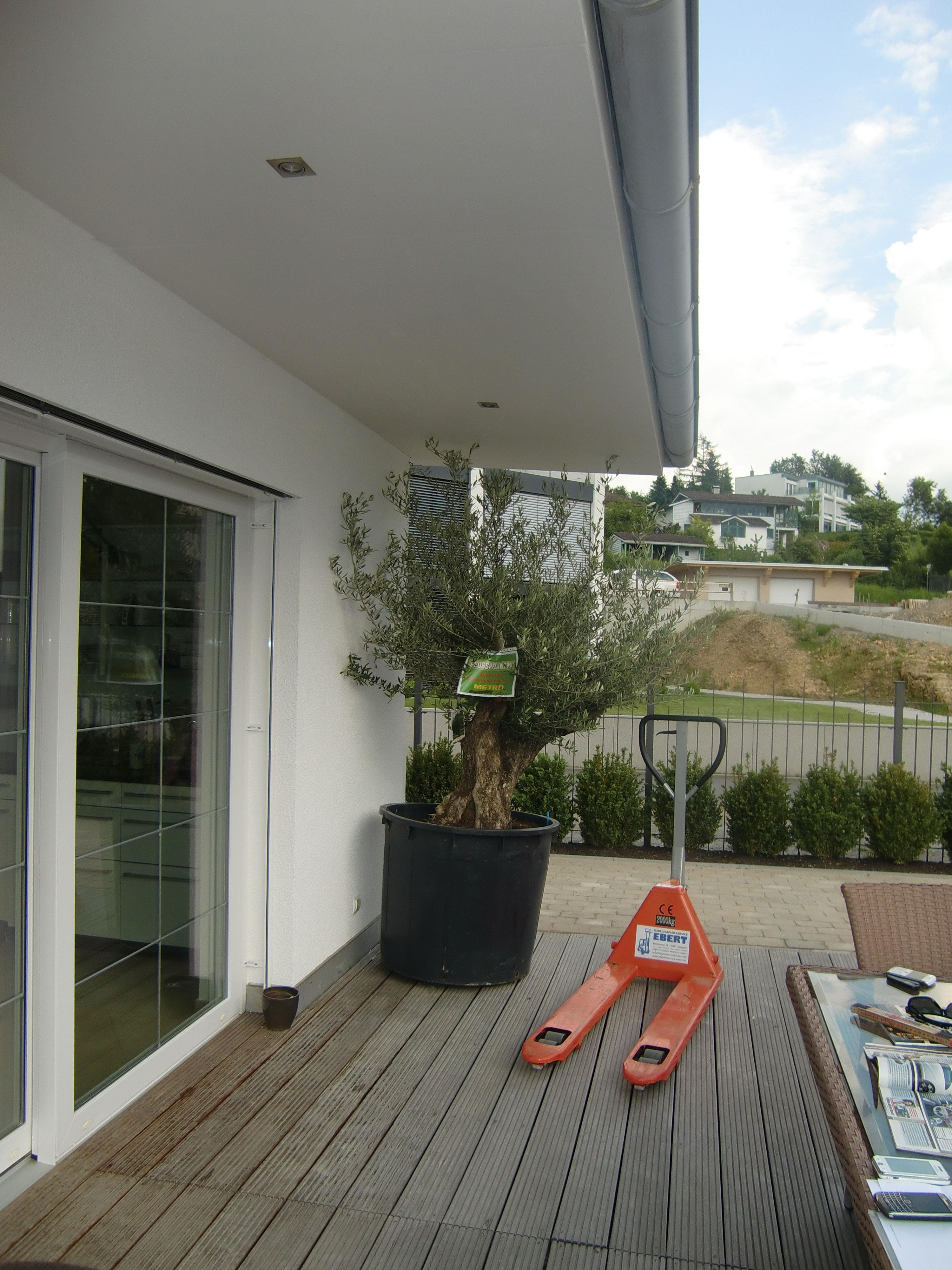 palmen von mir in ihrem neuen zuhause palmsandmores. Black Bedroom Furniture Sets. Home Design Ideas