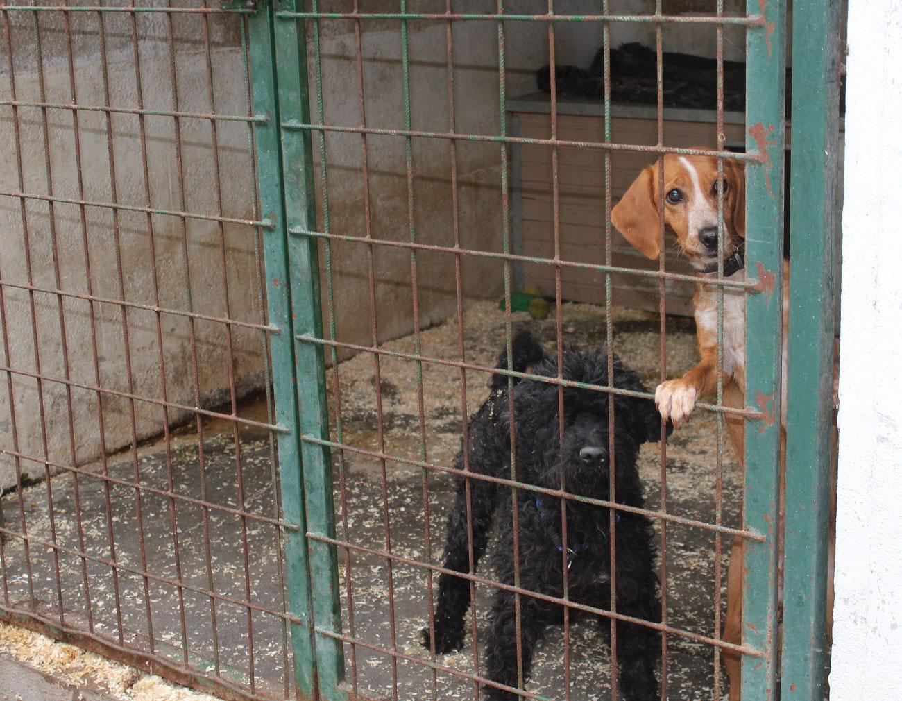 Tierschutzverein Ungarn