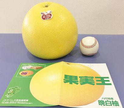 晩白柚(ばんぺいゆ)…柑橘類ザボン区分で重量世界一