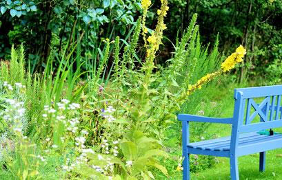 Blaue Gartenbank steht in grüner Blumenwiese
