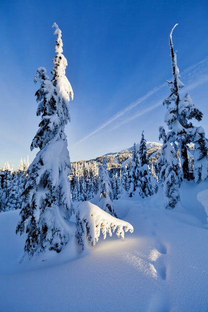 Snow covered trees and ground with blue sky on a Mountain in the Comox Valley