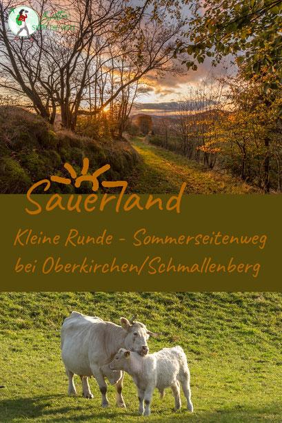 sauerland, wanderung, rundwanderung, kleine, oberkirchen, schmallenberg