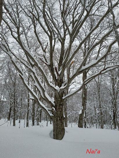 犬と雪遊び 森遊び 冬の森