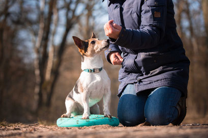 Senior honden training workshops privé les