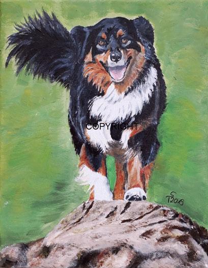 Hundeporträt: Australian Shepherd mit schwarz, braun, weissem Fell, läuft über einen Baumstamm, Tiermalerei, gemalte Tierportraits nach Fotovorlage, Tiere zeichnen lassen