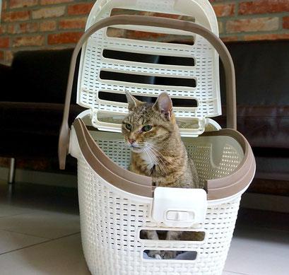 Katze inhalieren lassen