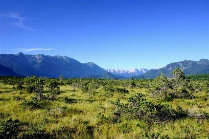 Hochmoor im Murnauer Moos