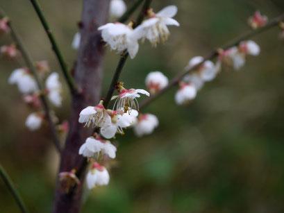 foto sayuri yamagata