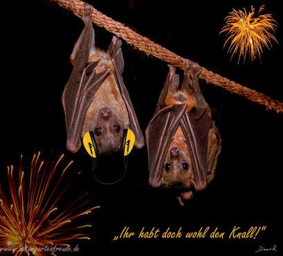 Fotomontage Feuerwer Sylvester Fledermaus photomontage sylvester bat fireworks