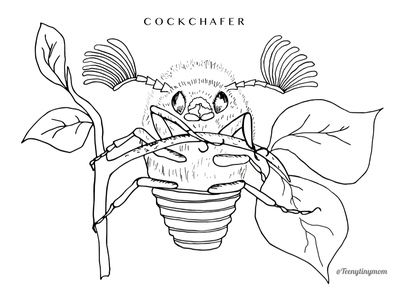 cockchafer colouring picture bugs beetle