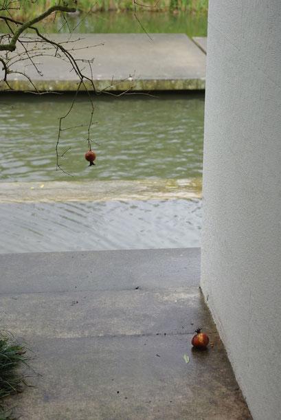 Two Pomegranates - Masami Hirohata