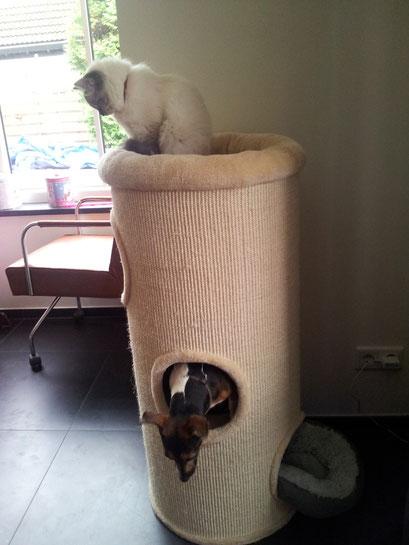 kattenoppas aan huis, kattenverzorging, kattengedrag, kattengedragstherapie, kattengedragsadvies