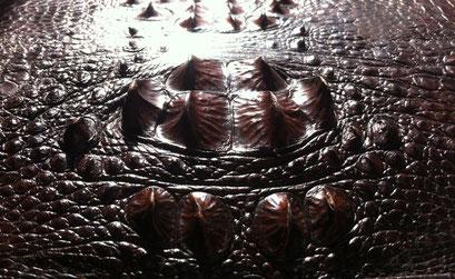 Bild von Krokodilleder