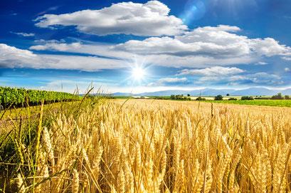Rehwild-Rettung Landwirtschaft