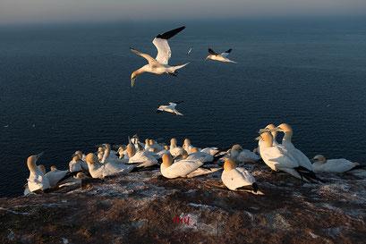 Fotoreise nach Helgoland mit Tierpfoto