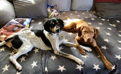Hundepension, Hundebetreuung, Hundetagesstätte