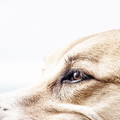 Artgerechte Hundeerziehung