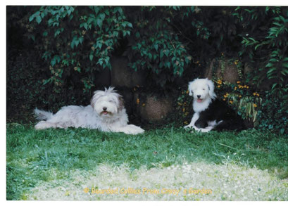 Bearded Collie, Bobtail, Old English Sheepdog