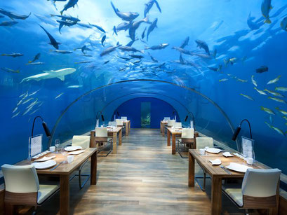 Ithaa Undersea Restaurant Malediven Conrad Resort Urlaub
