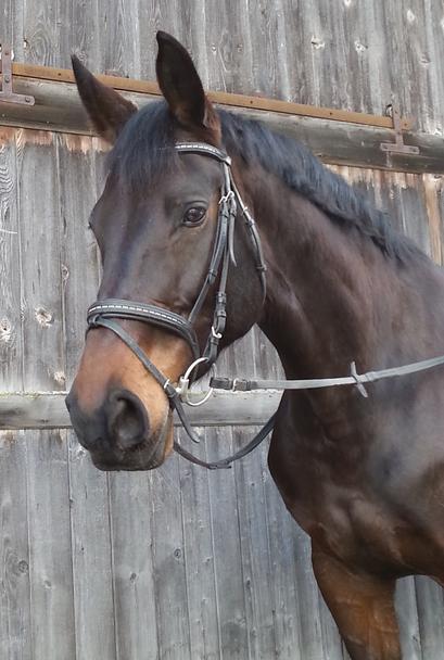 Pferd, La Montanara