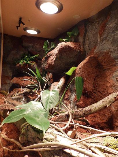 Pflanzen im Pythonterrarium