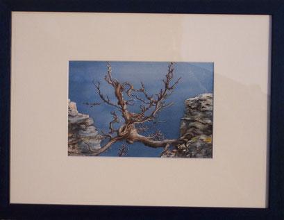 Gavarnie, arbre mort (Aquarelle.)