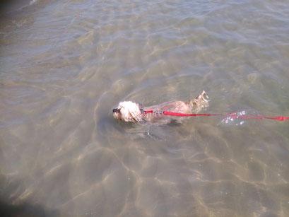 ... schwimmen im Meer ... 8,8J