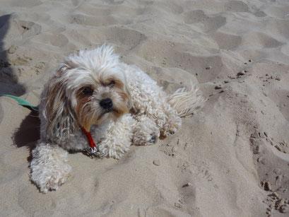 ... im Sand ist es am Schönsten ... 3,8J