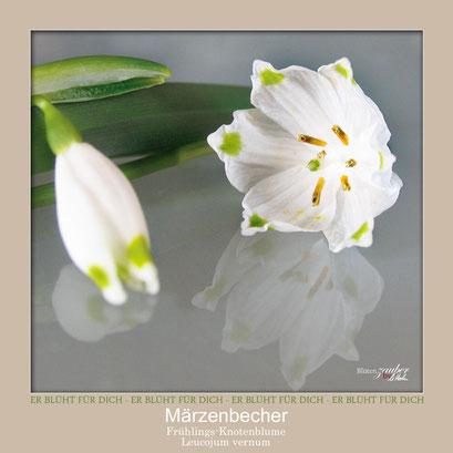 Makro: Märzenbecherblüte innen©Eschenblatt-Verlag
