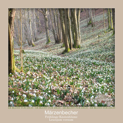 Märzenbecher in der Natur©Eschenblatt-Verlag
