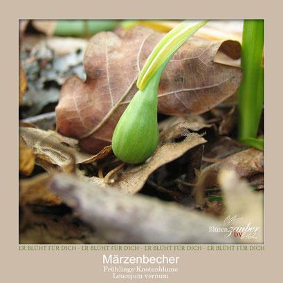 Märzenbecher-Samenkapsel©Eschenblatt-Verlag