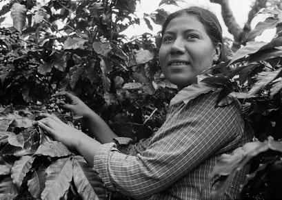 © Angela Mejias. Sur les exploitations caféières familiales, qui produisent la majorité du café national. Ce sont en général les femmes qui sont chargées de l'entretien et de la cueillette. Costa Rica