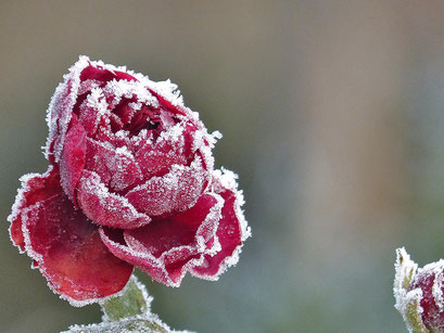 Manchmal fällt auf uns der Frost