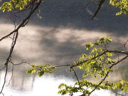 Frisches Grün an dünnen Zweigen