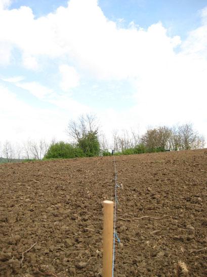 """Wir haben das """"Glück"""", dass wir auch einen Weinberg mit """"Spitzzeilen"""" haben, d.h. hier muss man richtig mitdenken, weil die Fläche an einer Seite schräg verläuft und somit die Reihen hier kürzer sind wie die anderen."""