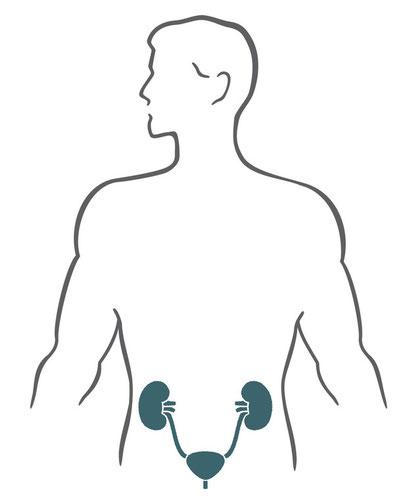 Urogenitaltrakt
