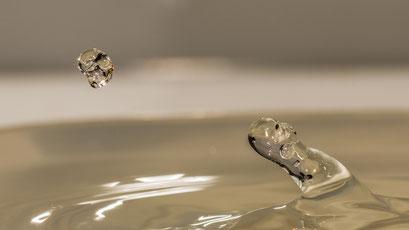 Wasserwesen jagt Wasserwesen