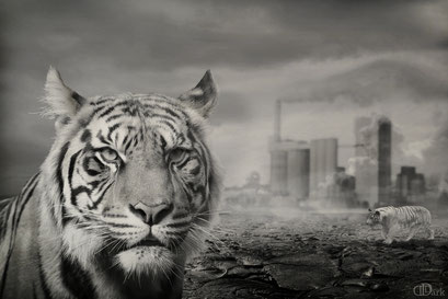 dream from a tiger