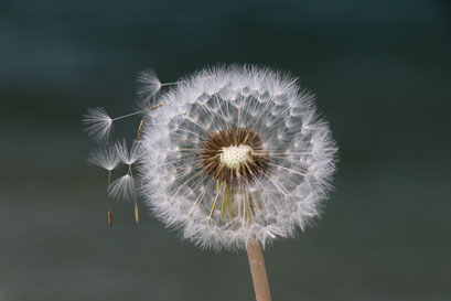 Make a wish - © mariani nathalie