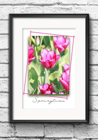 Modernes Wandbild Poster Tulpen bunt pink